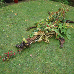 Our Michaelmas Autumn Hedgerow Dragon