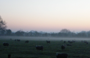 rush-farm