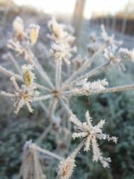 frozen-plant