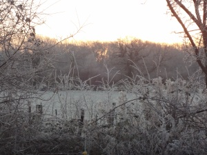 frozen-scene